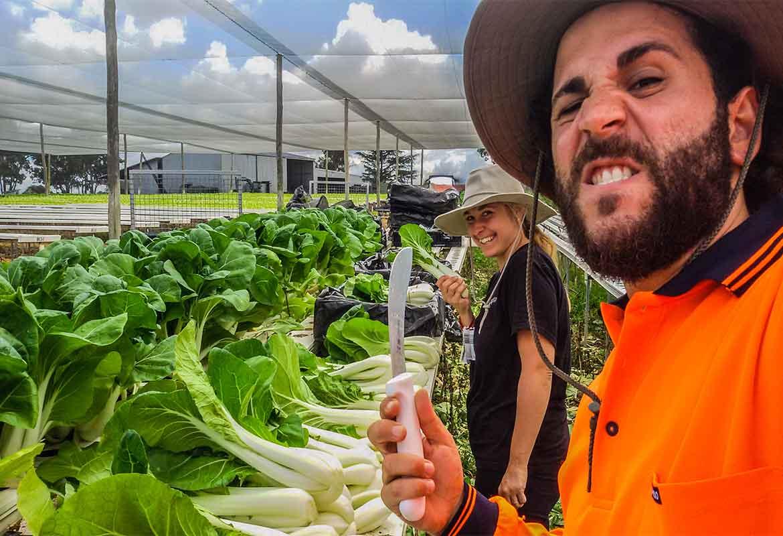 Farm australiane