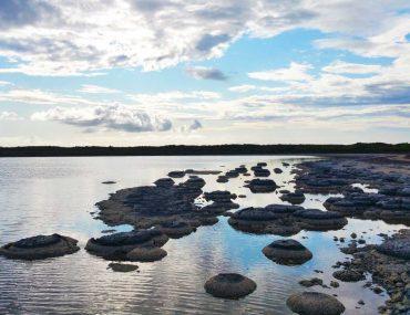 stromatoliti australia