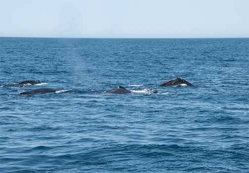 Vedere le balene in Australia